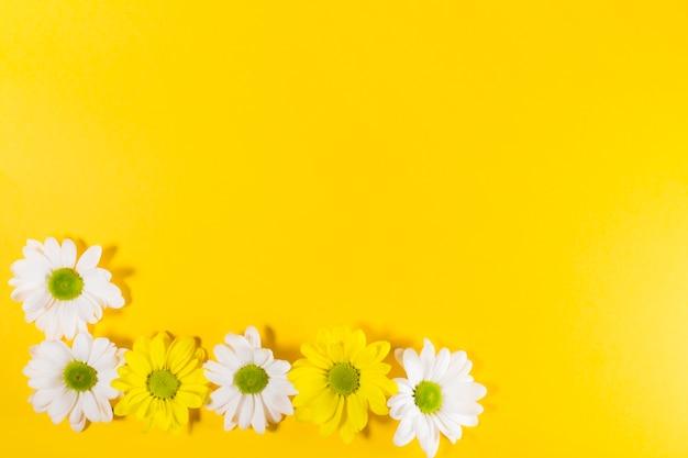 Fleurs blanches et jaunes Photo gratuit