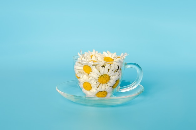 Fleurs de camomille dans une tasse en verre transparent. thé à la camomille naturelle, plantes médicinales Photo Premium