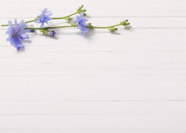 Fleurs De Chicorée Sur Le Fond En Bois Blanc Photo Premium