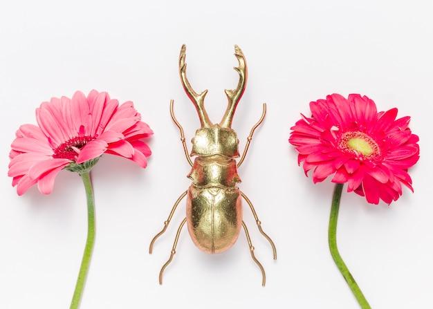Fleurs et coléoptères Photo gratuit