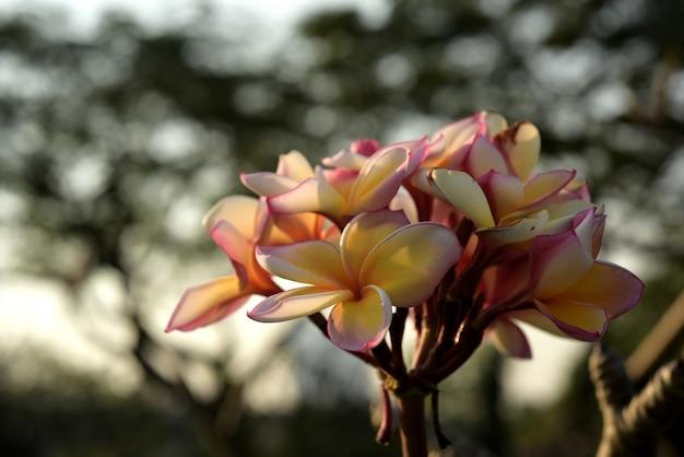 Fleurs colorées dans la nature Photo Premium