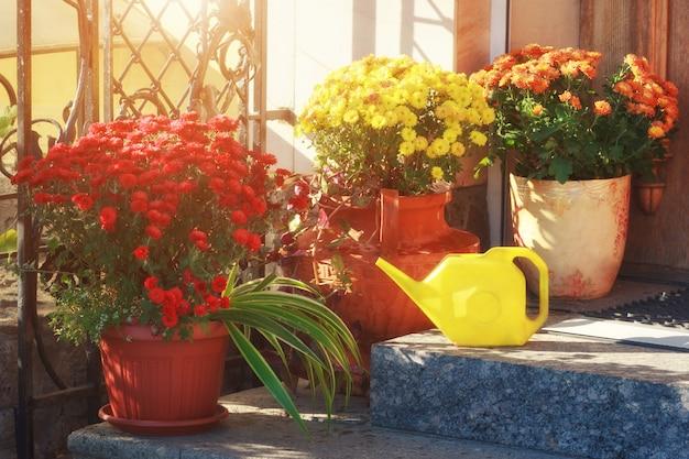 Fleurs colorées dans des pots sur le porche de la maison avec arrosoir. Photo Premium