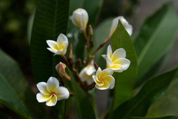 Fleurs colorées.groupe de flower.group de fleurs jaunes blanches et jaunes Photo Premium