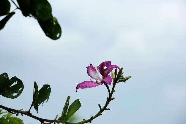 Fleurs colorées.groupe de flower.group de fleurs roses blanches et jaunes Photo Premium