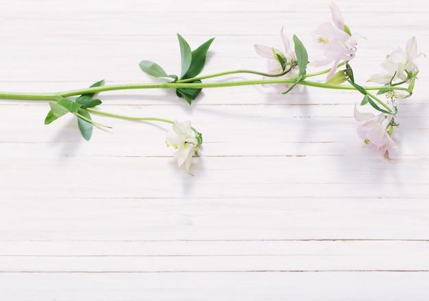 Fleurs De Columbine Sur Fond De Bois Blanc Photo Premium