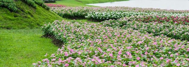 Fleurs de cresson rose Photo Premium