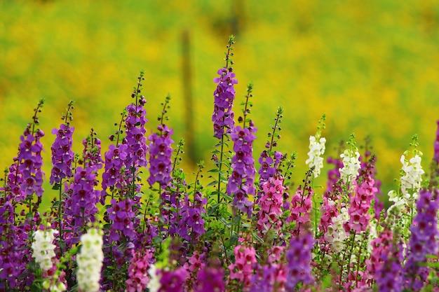 Fleurs épanouies avec fond clair naturel Photo Premium