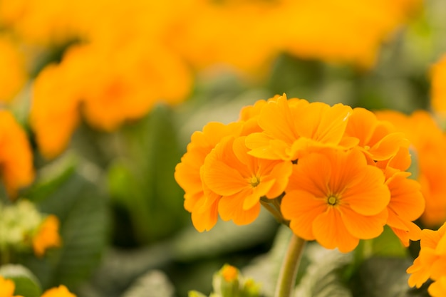 Fleurs d'été jaunes avec espace de copie Photo gratuit