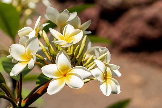 Fleurs exotiques avec un arrière-plan flou Photo gratuit