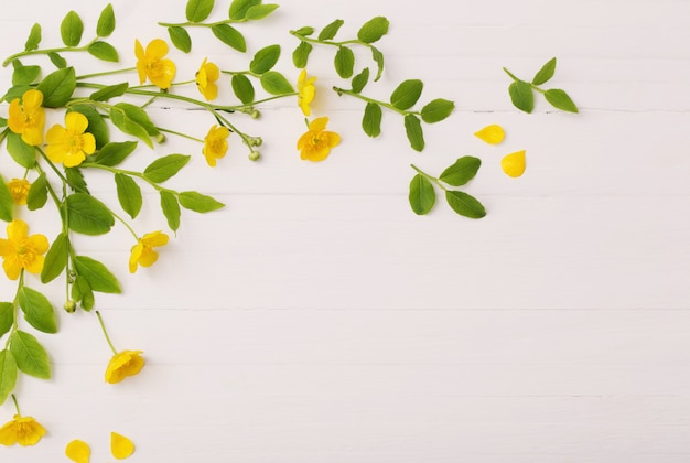 Fleurs Et Feuilles Sur Fond De Bois Blanc Photo Premium