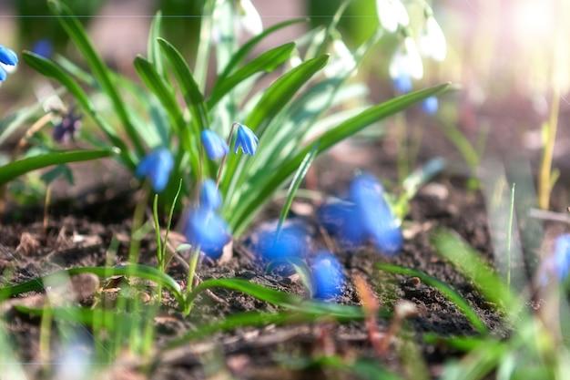 Fleurs floues à la lumière du soleil douce. Photo Premium