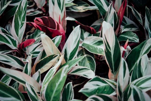 Fleurs de fond abstrait dans le graden Photo gratuit