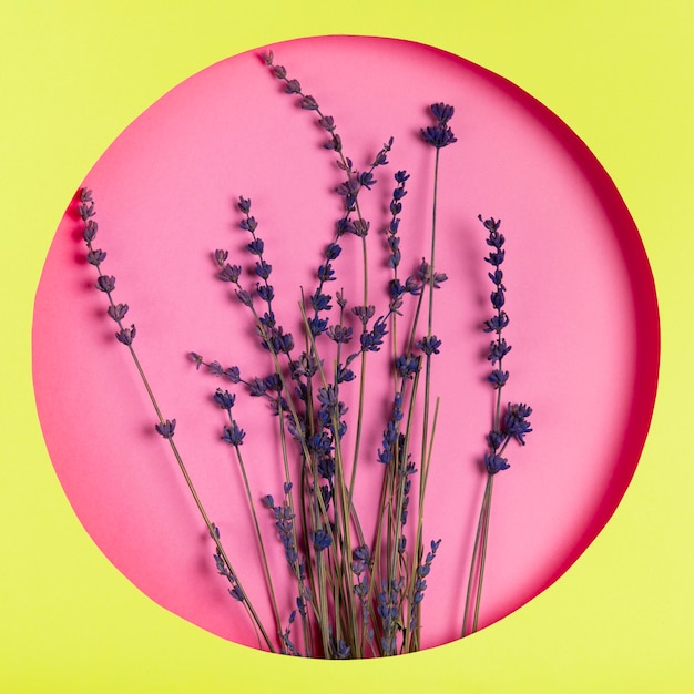 Fleurs sur fond rose dans cadre vert Photo gratuit
