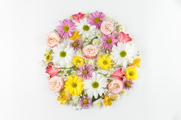 Fleurs fraîches colorées disposées en cercle sur fond blanc Photo gratuit