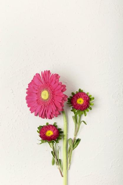 Fleurs fraîches féminines avec espace de copie Photo gratuit