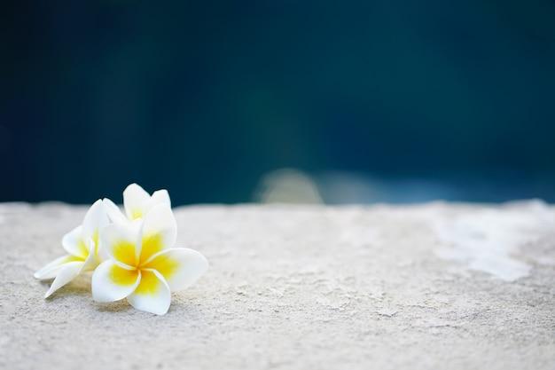 Fleurs de frangipanier Photo Premium