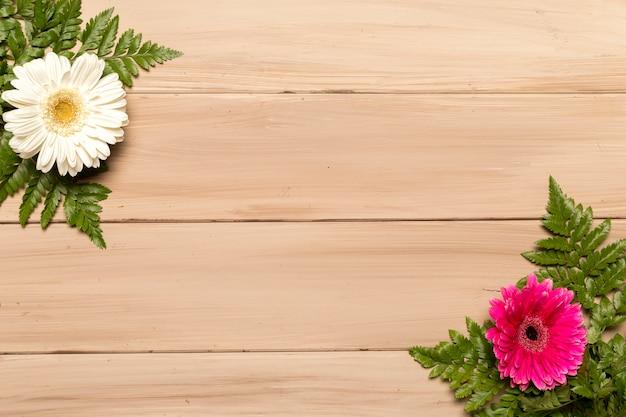 Fleurs de gerbera et feuilles de fougère Photo gratuit