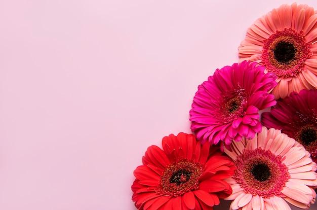 Fleurs De Gerbera Lumineux Sur Fond Rose Pastel Photo Premium