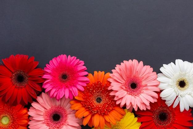 Fleurs De Gerbera Vue De Face Sur Fond Noir Photo gratuit