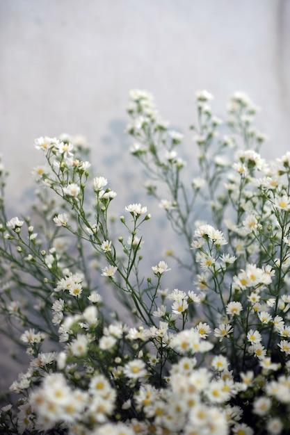 Fleurs, gypsophila, belle, pour l'amour, la publicité et l'espace de texte Photo Premium
