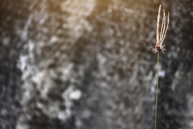 Fleurs d'herbe avec la lumière du soleil et fond en bois dans le jardin. espace copie Photo Premium