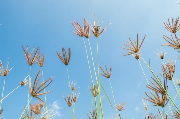 Fleurs d'herbe Photo Premium