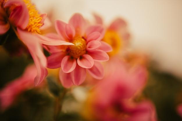 Fleurs sur un jardin Photo Premium