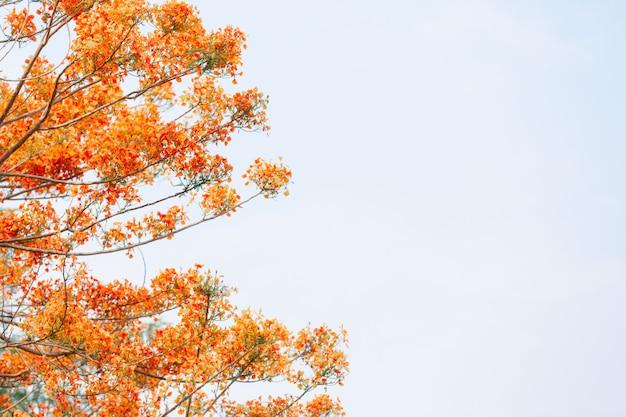 Fleurs jaunes dans le ciel. Photo gratuit