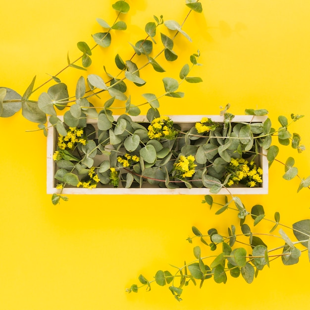 Fleurs jaunes et feuilles vertes sur un plateau en bois sur fond jaune Photo gratuit