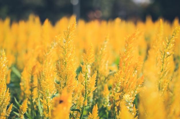 Fleurs jaunes Photo gratuit