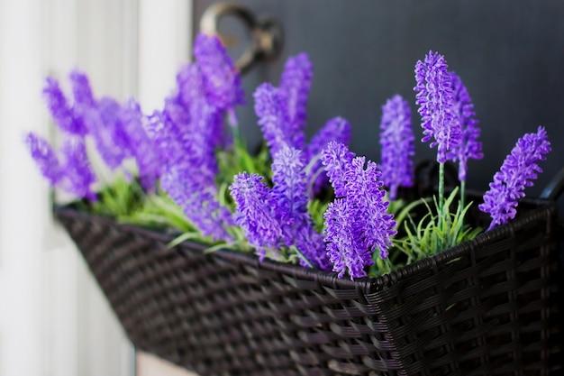 Fleurs de lavande dans un pot dans les rues de la ville dans des pots suspendus. Photo Premium