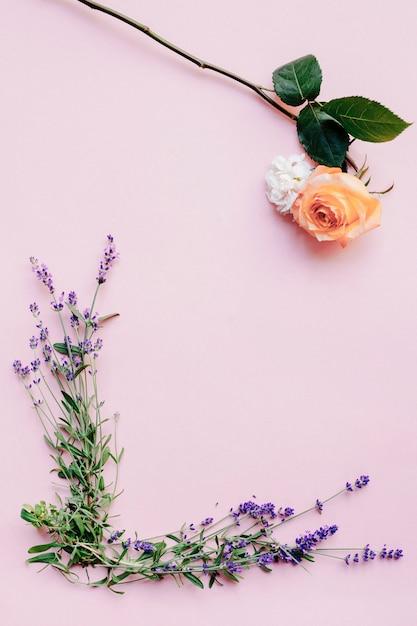 Fleurs De Lavande Fraiche Et Rose Sur Fond Rose Telecharger Des