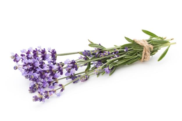 Fleurs De Lavande Isolées Photo Premium