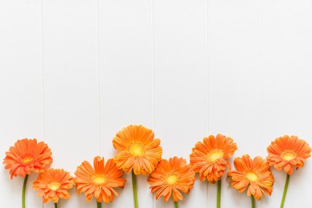 Fleurs De Marguerite Colorées Décoratives Sur Un Fond Photo gratuit