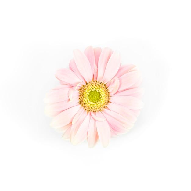 Fleurs De Marguerite Photo gratuit