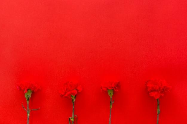 Fleurs d'oeillets disposés sur fond de fond rouge Photo gratuit