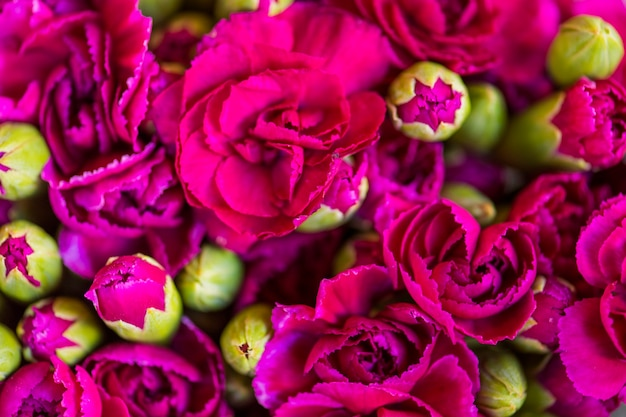Fleurs d'oeillets roses fond texturé Photo gratuit