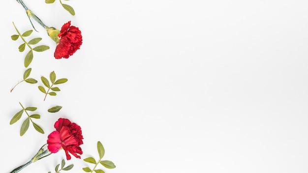 Fleurs d'oeillets rouges avec des feuilles sur la table Photo gratuit