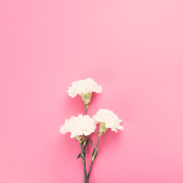 Fleurs d'oeillets sur table rose Photo gratuit