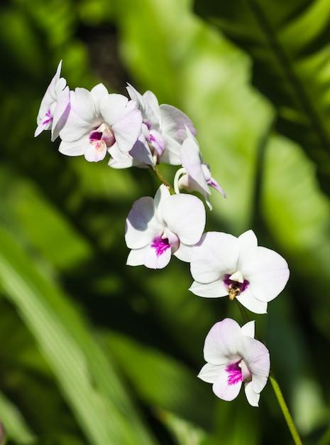 Fleurs d'orchidée blanches avec du vert Photo Premium