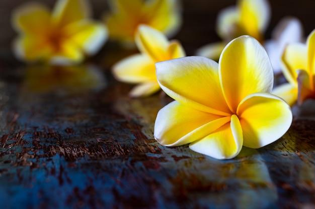 Fleurs de plumeria frangipanier jaune sur table rustique en bois bleu foncé. Photo Premium