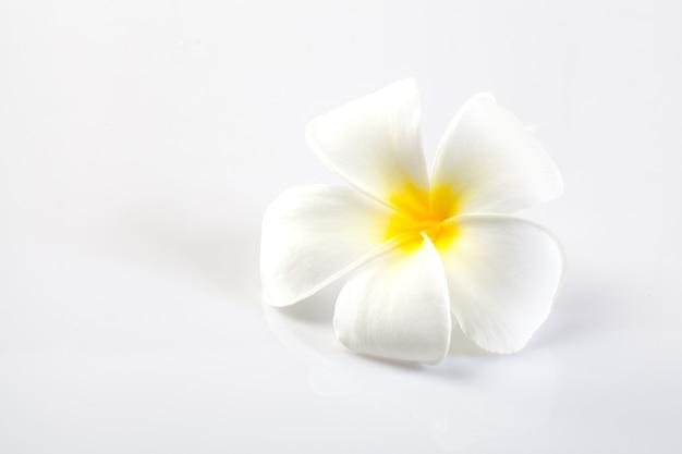 Fleurs de plumeria isolés sur blanc. Photo Premium