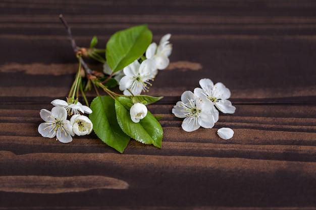 Fleurs de pommier sur une table en bois Photo Premium