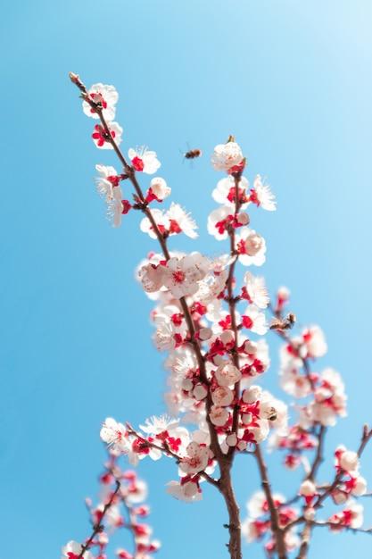 Fleurs de printemps. beau verger. Photo Premium