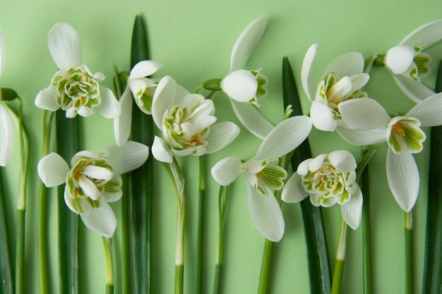 Fleurs De Printemps, Perce-neige Blancs Sur Fond Vert. Photo Premium