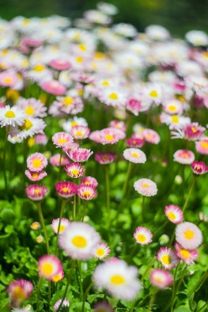 Fleurs de printemps Photo Premium