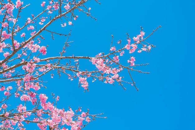 Fleurs roses sur la branche avec un ciel bleu pendant la floraison printanière Photo Premium