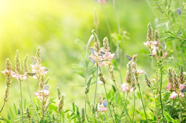 Fleurs roses sur fond vert avec des papillons bleus, beau fond naturel, avec un doux soleil jaune, derrière la lumière Photo Premium