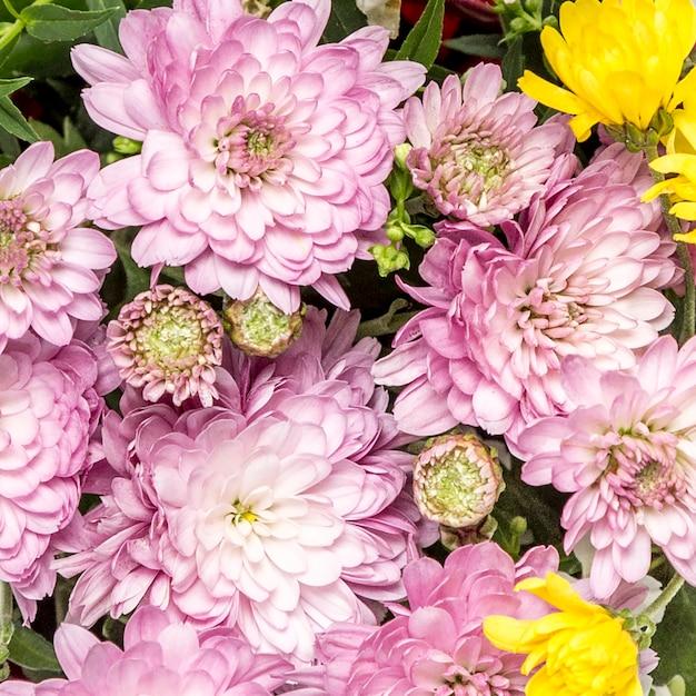 Fleurs Roses Et Jaunes Aux Feuilles Vertes Photo gratuit