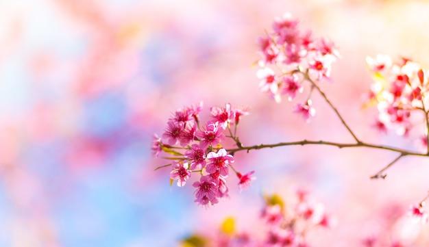 Fleurs roses qui sont nés d'une branche d'un arbre Photo gratuit